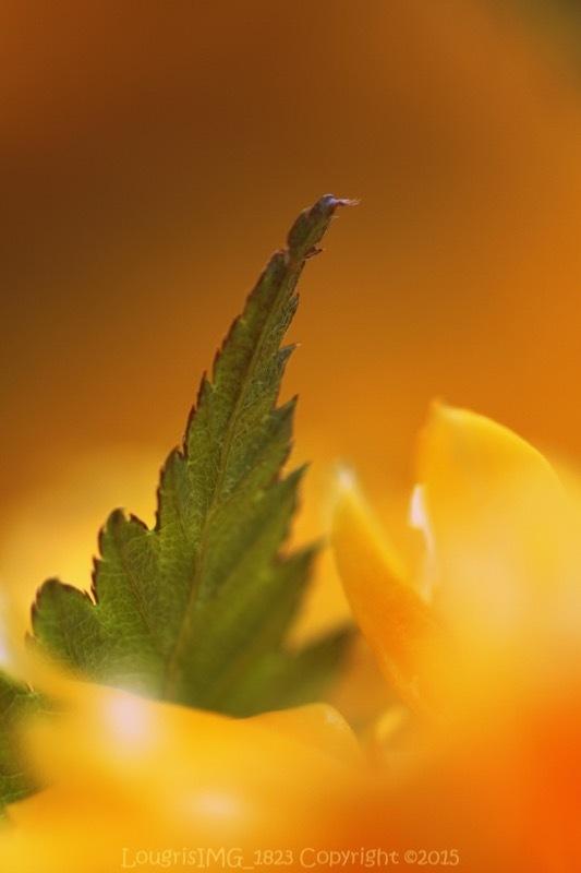 Et fleur mes rêves - IX