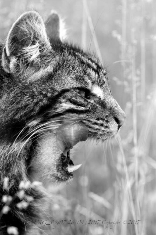 Moi vouloir être chat.