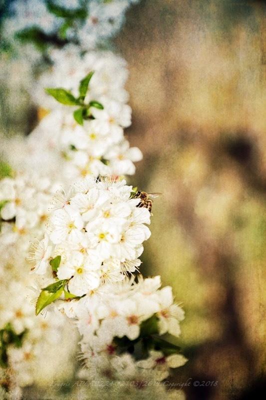 Les jours de miel.