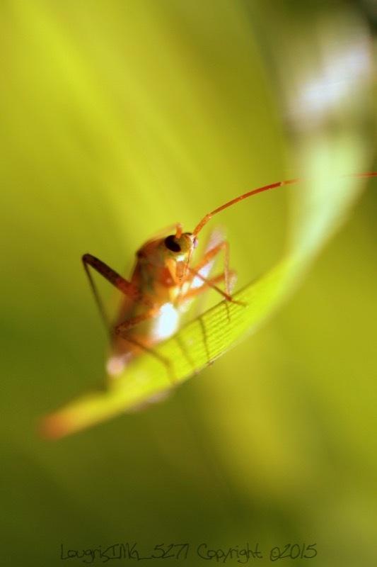 Bug life.