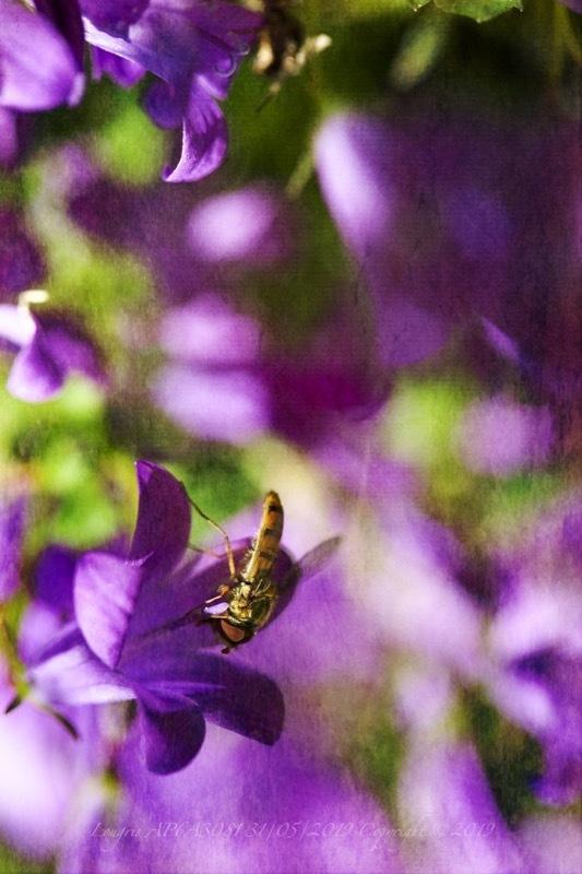 Purple Paradise.