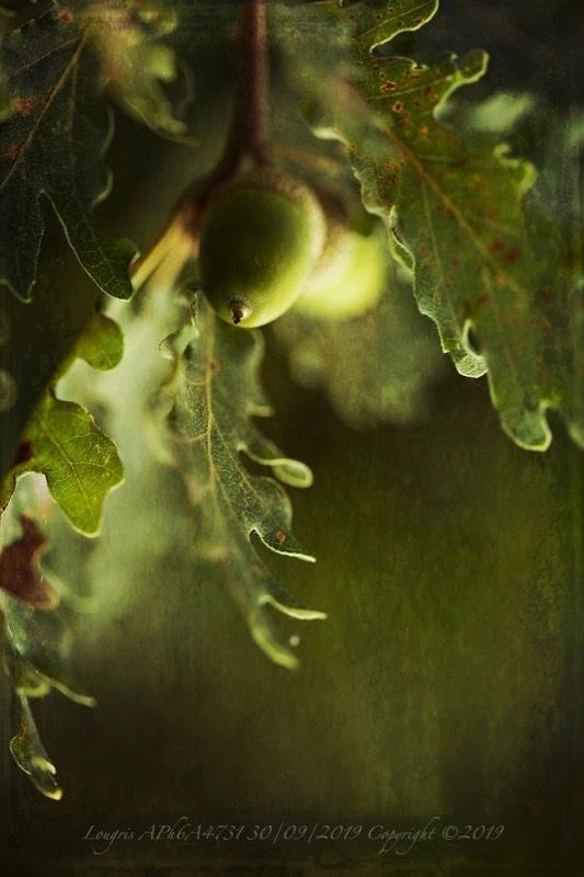 Les feuilles et le fruit.