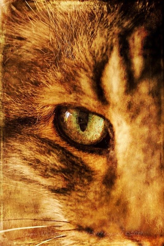 Dans l'oeil du chat.