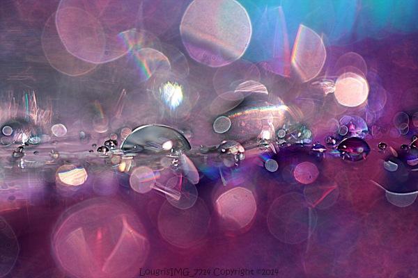 Perles (vac5)