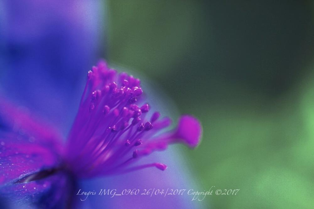 Ultraviolet.