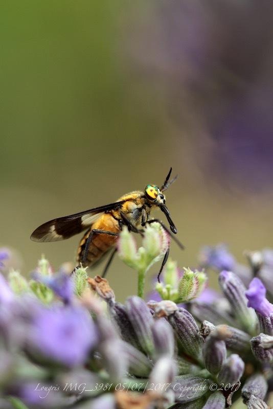 Y'a pas que les abeilles.