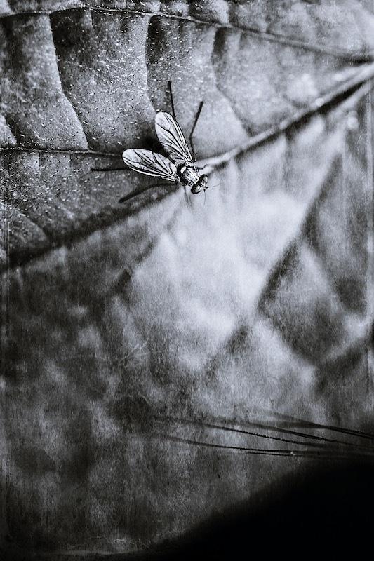 Nature monochrome V