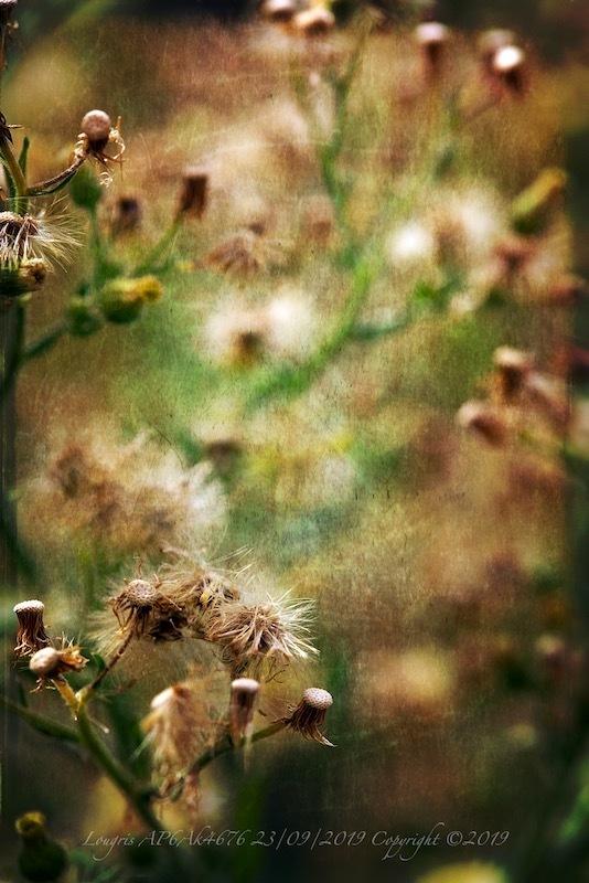 Faits d'herbes.