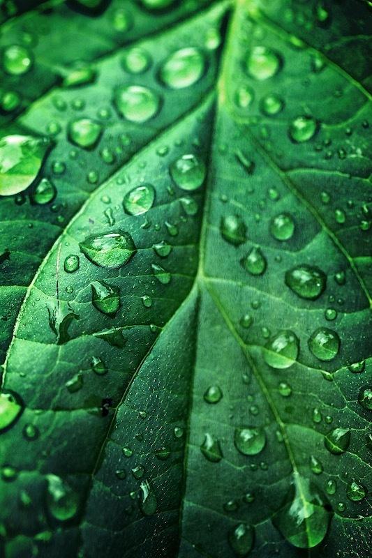 Vert d'eau.