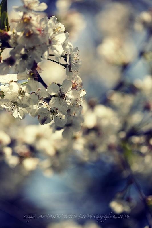 Un printemps