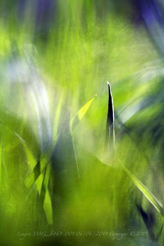 Green lives