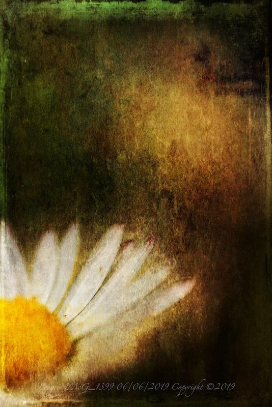 Le pouvoir des fleurs.