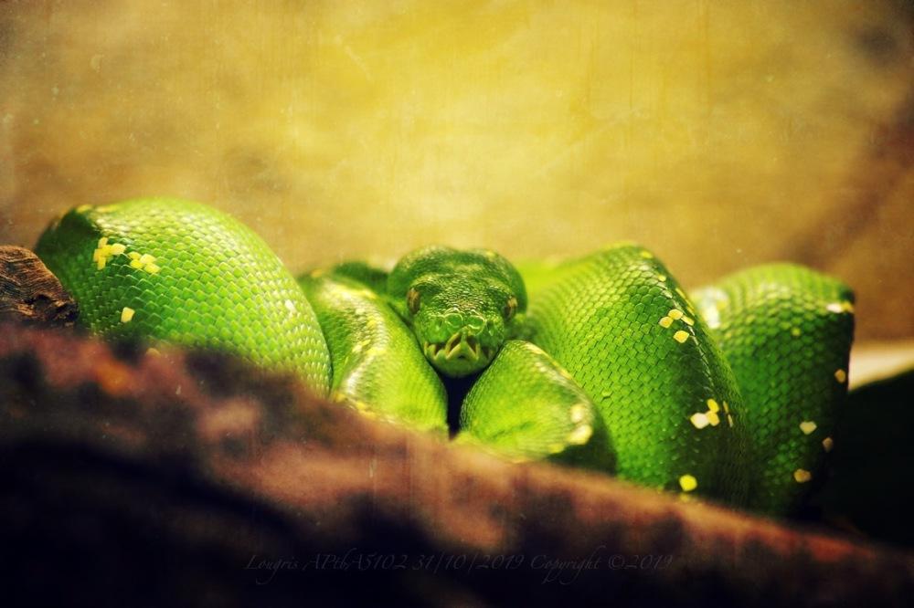 Green life.