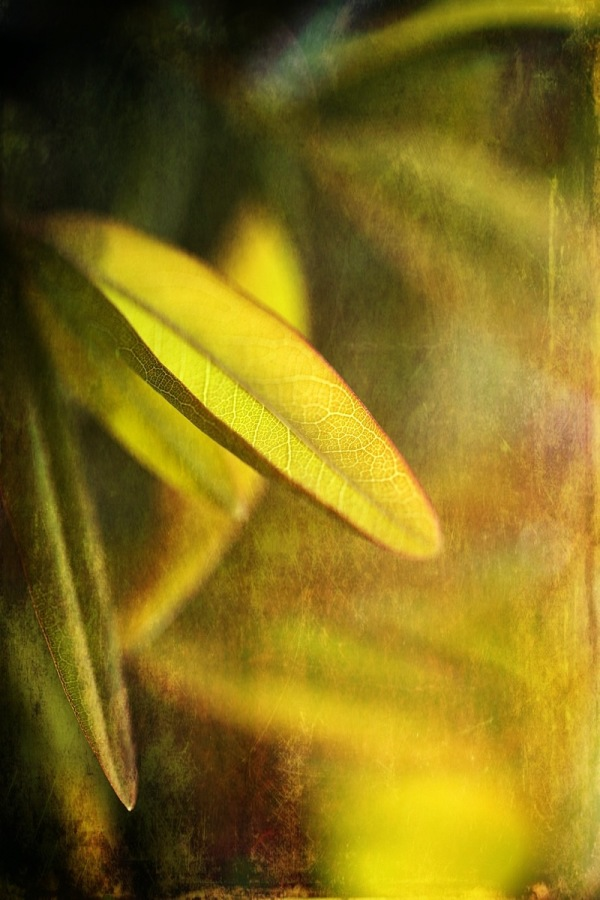 Simple leaf.