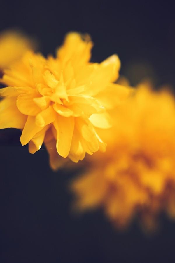 mainline yellow.