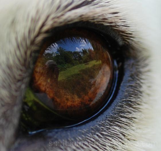 De spiegeling in een honden oog
