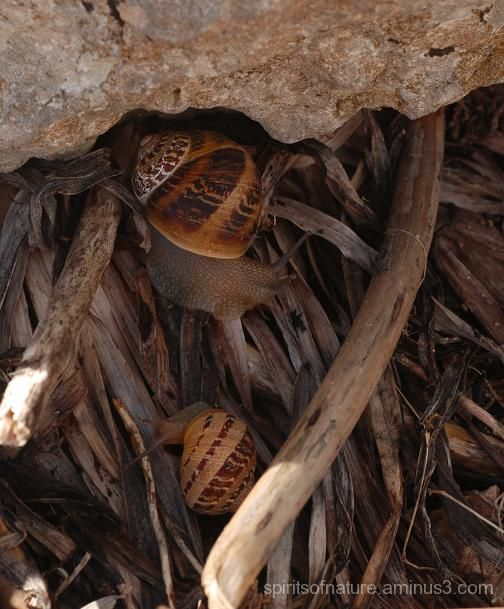 Snails (Malta 9)