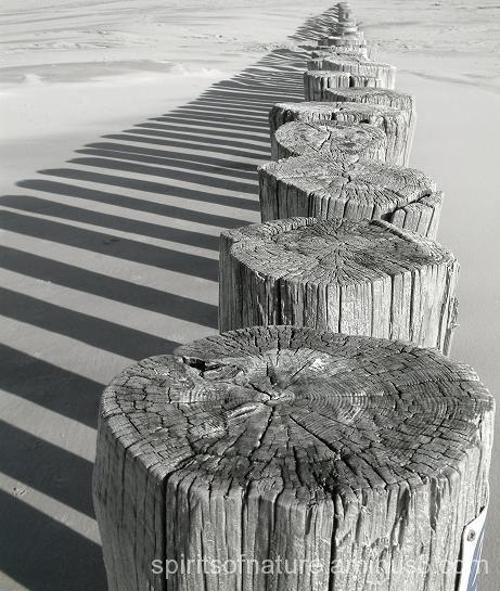 strand structuur hout schaduw zwart-wit ritme