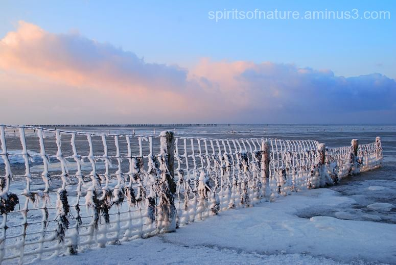 "Separated by a fence ""Wadden 2"""