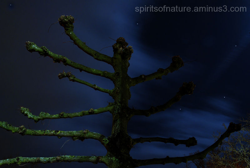 A willow against a sky whit stars
