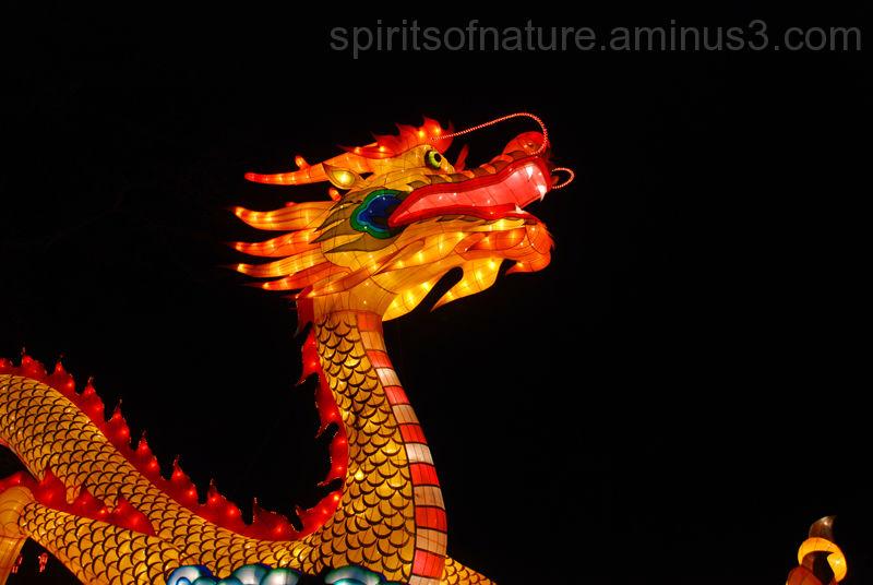 "China the festival of light ""Dragon(2)"""
