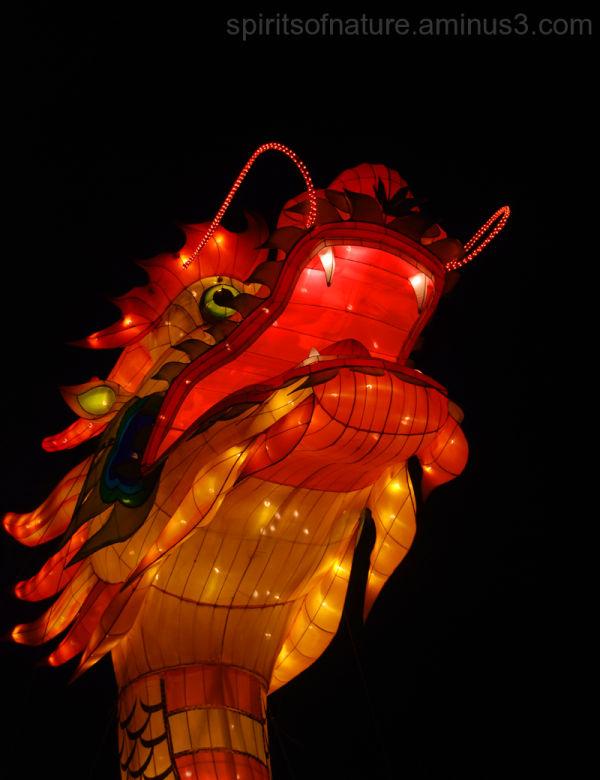 "China festival of light ""Dragon (3)"""