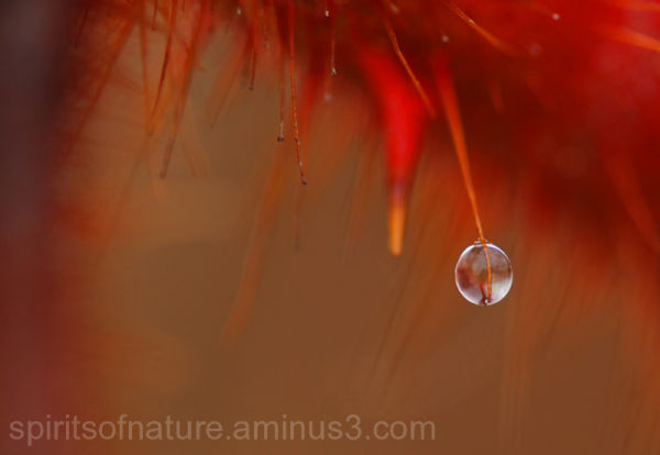 Red en Reflection.........