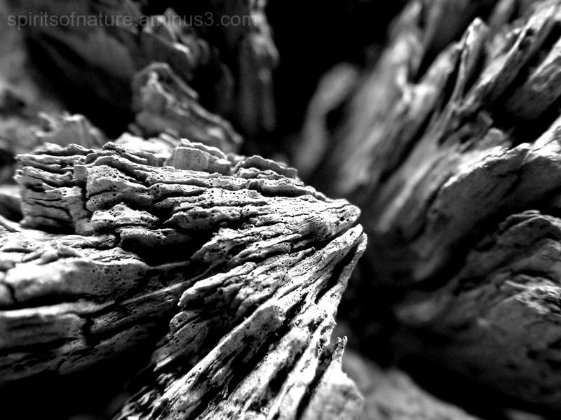 Structures in wood (2)