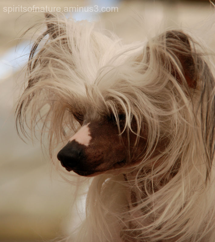 Beautiful or Ugly....(dogs 1)