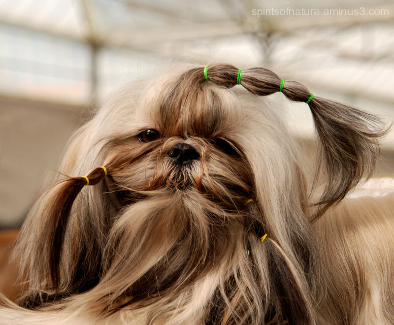 If your hair looks good...(Dogs 2)