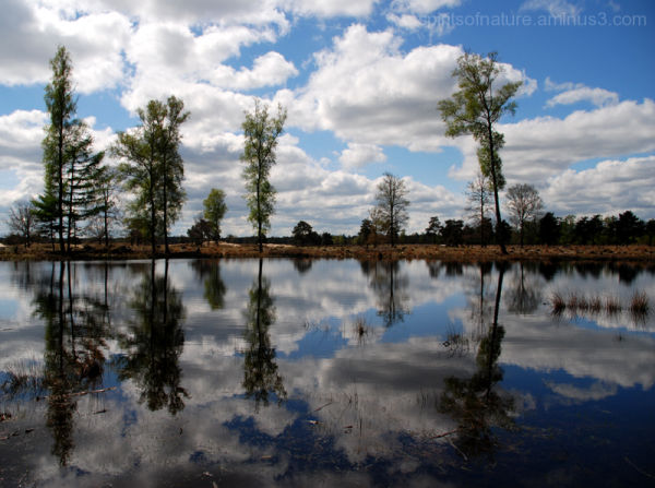 Reflections (2)