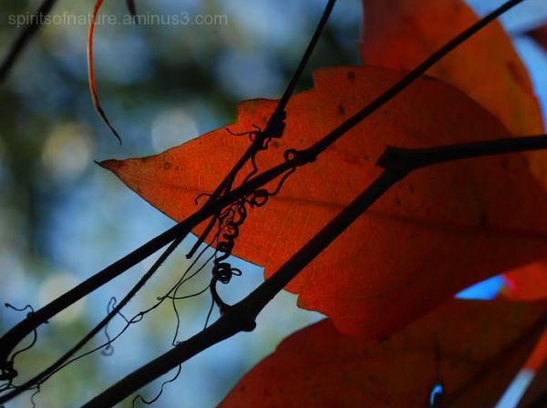 "Colors of nature ""Autumn (2)"""