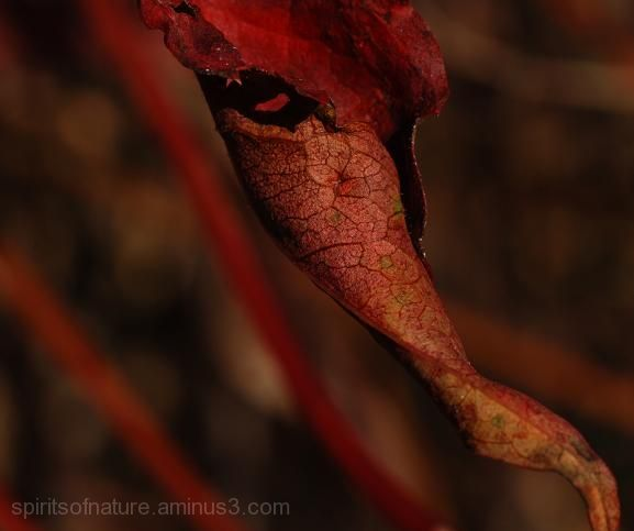 "Colors of nature ""Autumn(4)"""