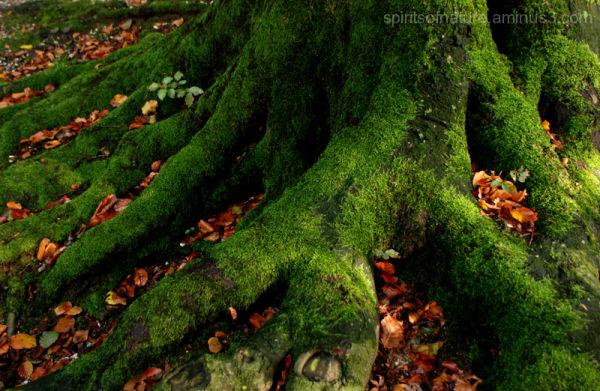 "Colors of Nature ""Autumn 5"""