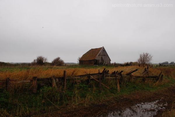 Texel (3)
