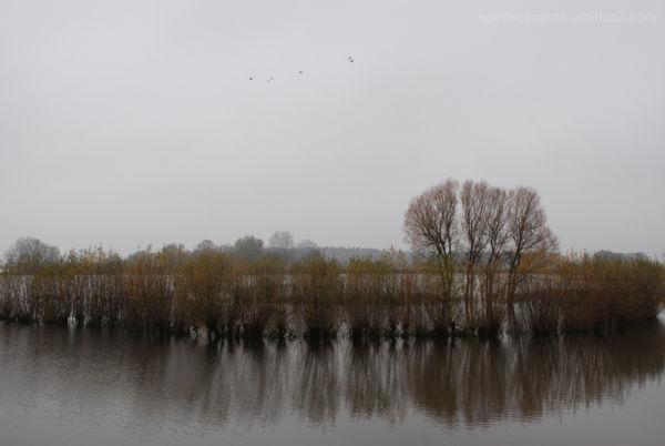 Near bij the river(5)