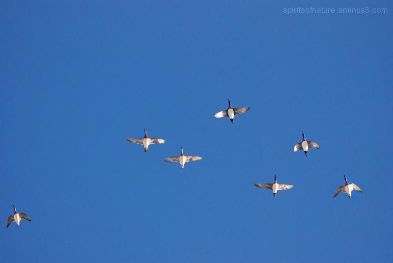 Fly away........
