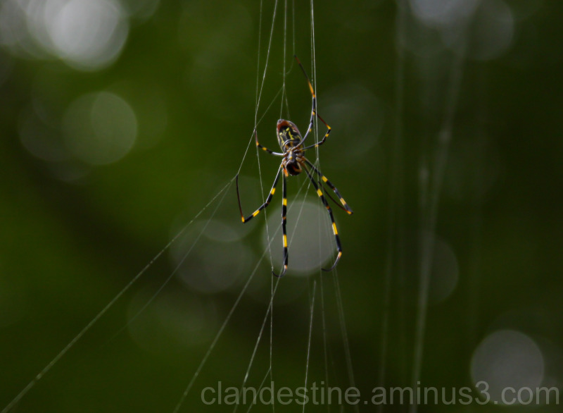 Spinning a web