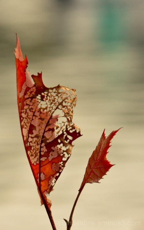 Autumn weathered leaf