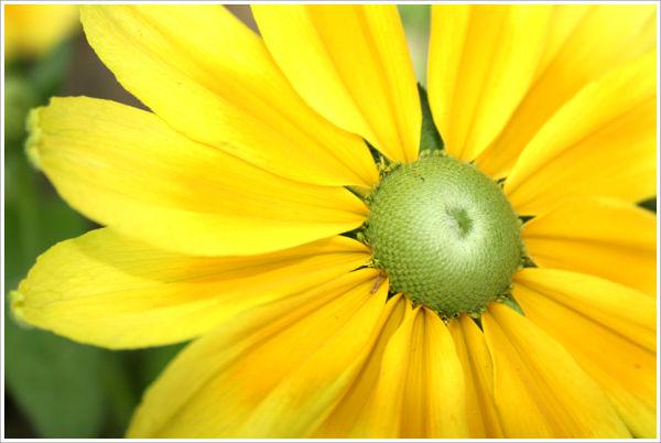 Jolie fleur jaune
