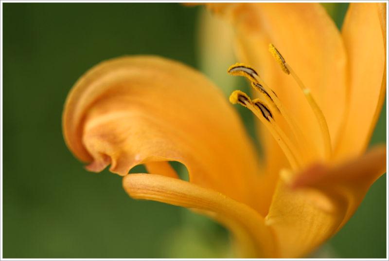 Fleur macro