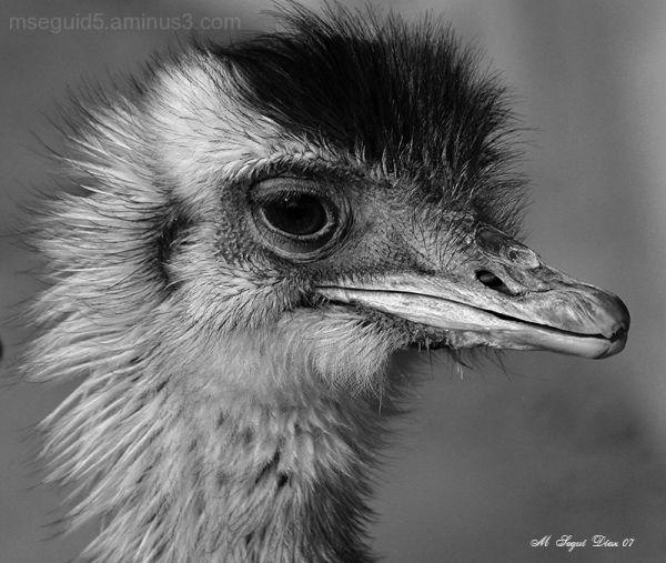 aves, retratos,
