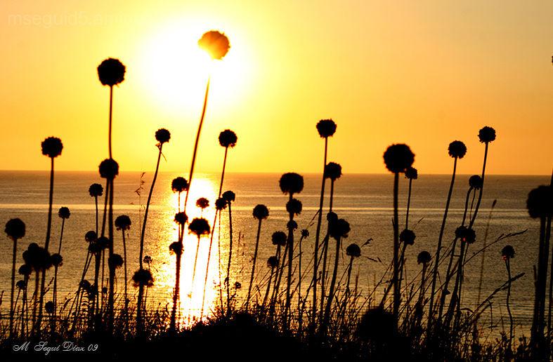 Plantas, Menorca