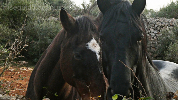 Retrato de caballos