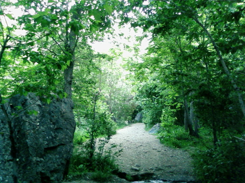 Tree6 Gloabdareh