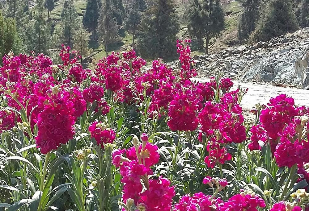 flower-951226