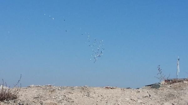 birds-951226
