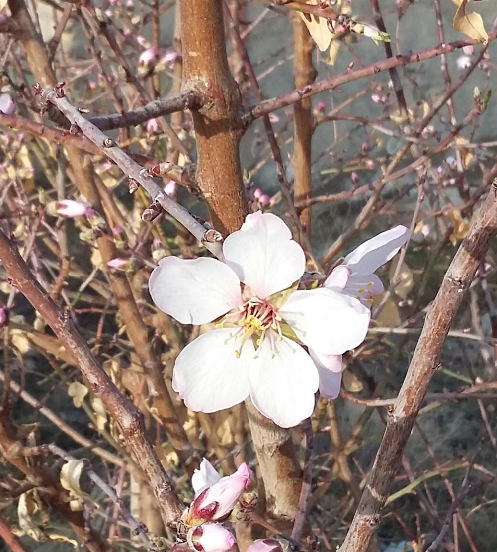 blossom-951228