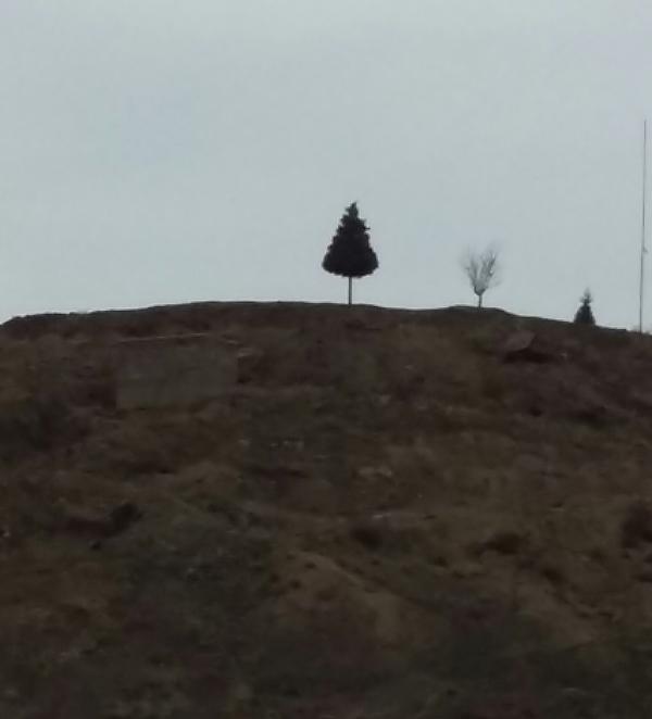 tree-951230