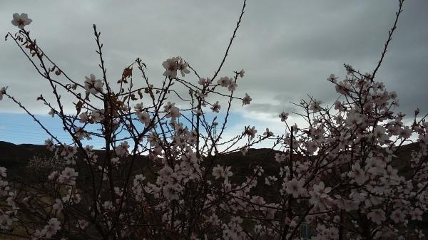 blossom-960101